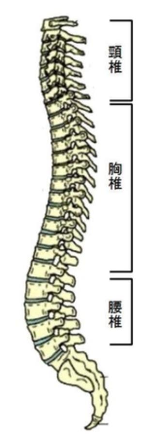 脊柱、小顔矯正、骨盤矯正