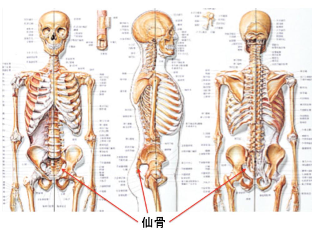 骨盤矯正、小顔矯正、ブライダルエステ